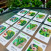 [随時受付中]「#おうちでタネまき」 プロジェクト実施──野菜や花のタネ(固定種)をおすそ分けします